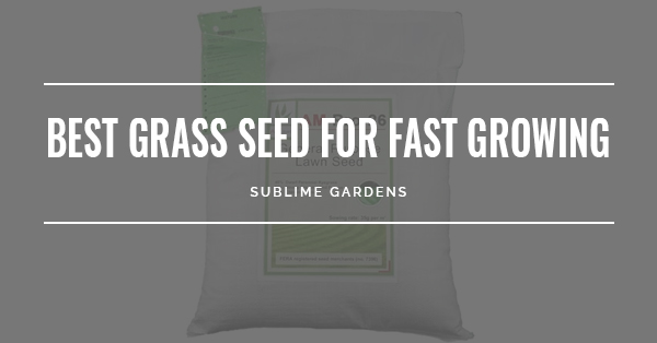 BEST GRASS SEEDS FOR FAST GROWING