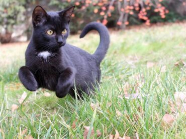 How To Stop Cats From Pooping In Your Garden