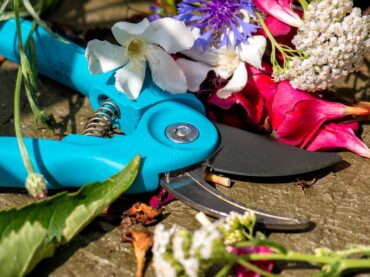 Sharpen Garden Shears With These Easy Tips