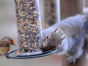 Squirrel-Proof Bird Feeders