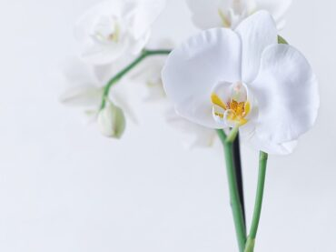 How to Repot Orchids?