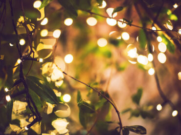 How to Set up Outdoor Tree Lights