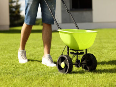 How to Seed a Lawn?