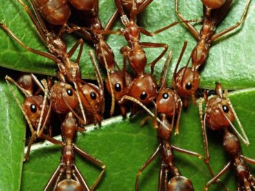 How to Get Rid of Ants in Your Garden?