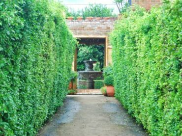 Hedgerows and its Benefits