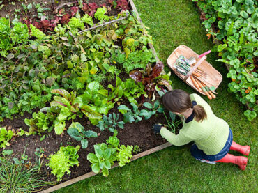 Cheapest Ways to Fill Raised Beds