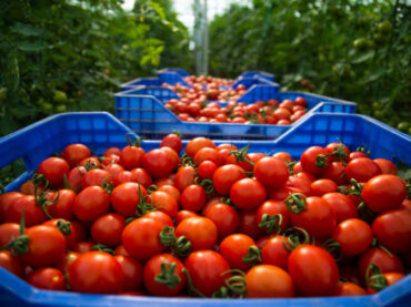Top 10 Secrets to Growing Tomatoes