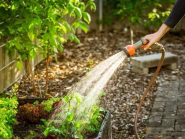 How Often Should I Water Outdoor Plants?